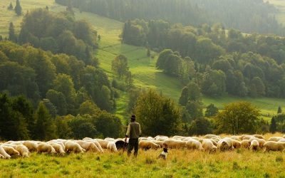 Farming in harmony with the environment